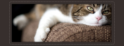 upholstery pet stains & odor removal treatment